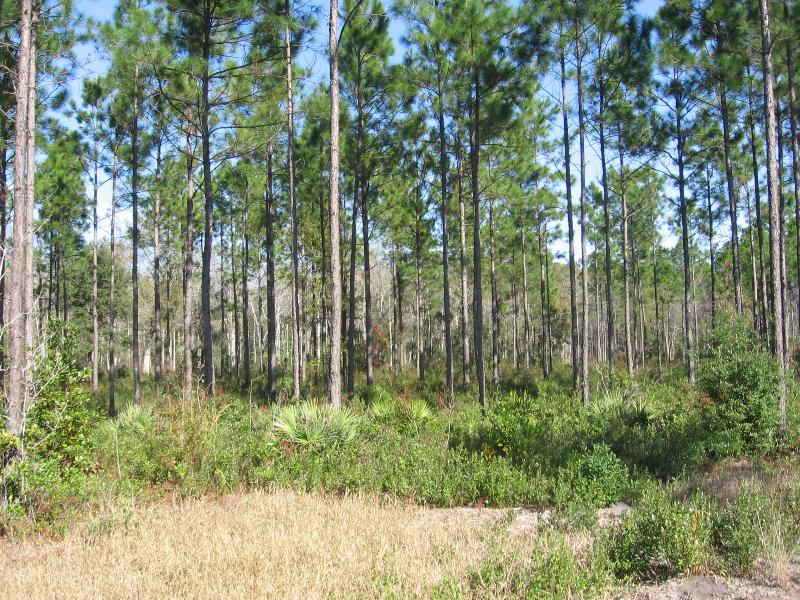 4.67 acres in Jacksonville, Florida