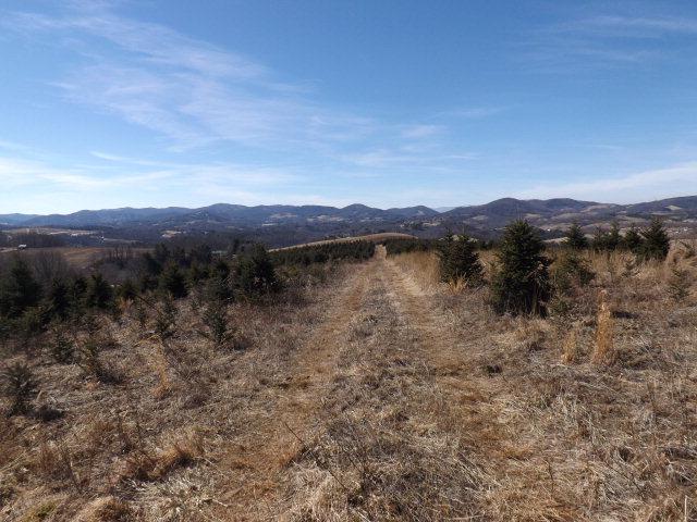 115 acres Sparta, NC