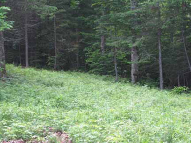 48 Lot # 18 Ledgerock Lane Lake Placid, NY 12946