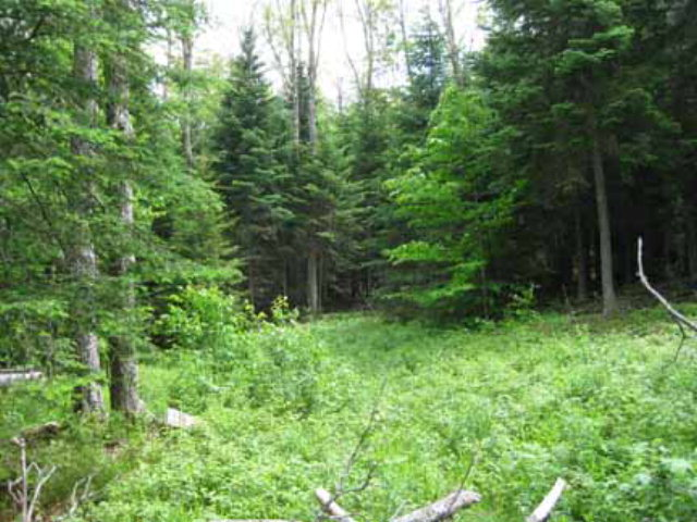 62 Lot # 15 Ledgerock Lane Lake Placid, NY 12946