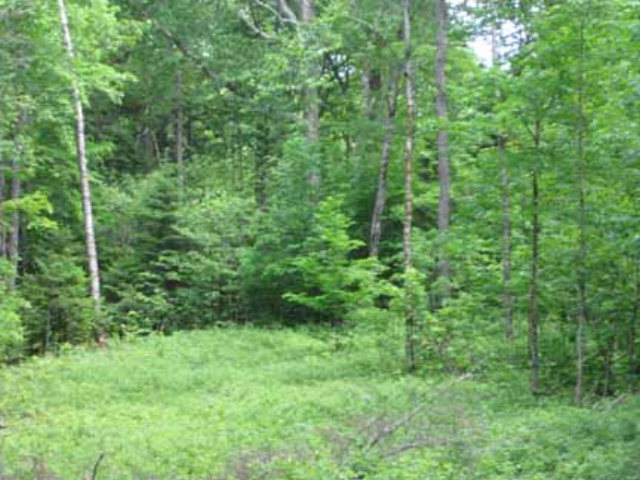 50 Lot # 17  Ledgerock Lane Lake Placid, NY 12946