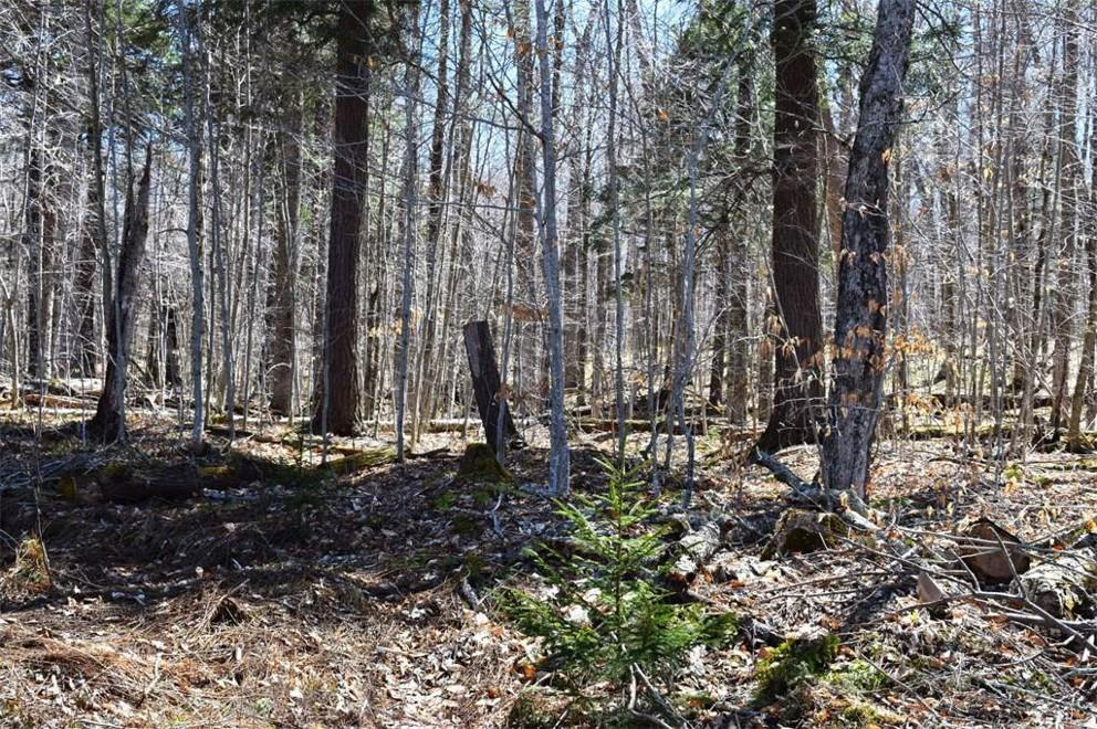 0 South Shore Road Old Forge, NY 13420