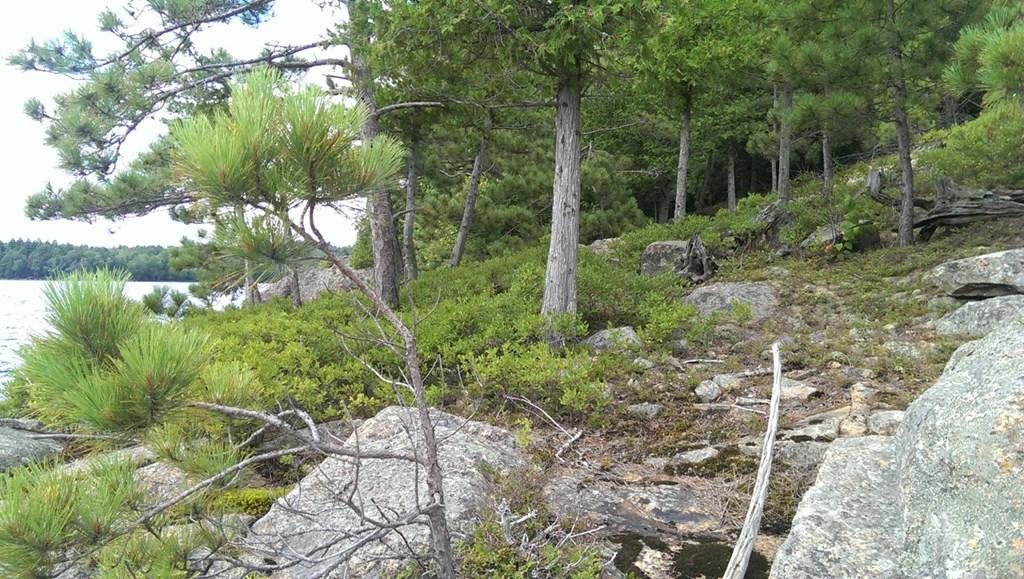 0 Birch Island - photo 8