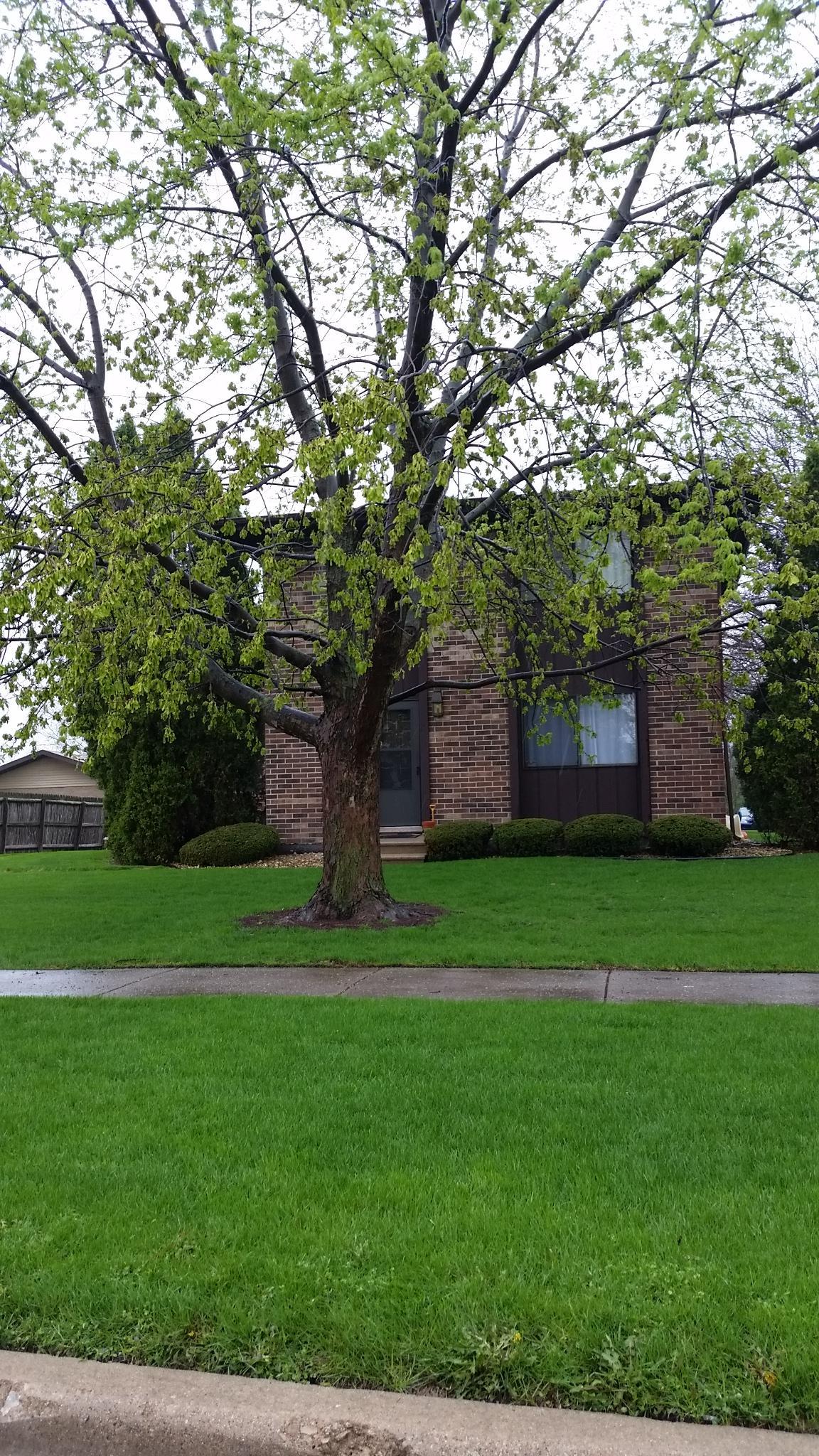 15806 Laramie Ave # 3, Oak Forest, IL 60452
