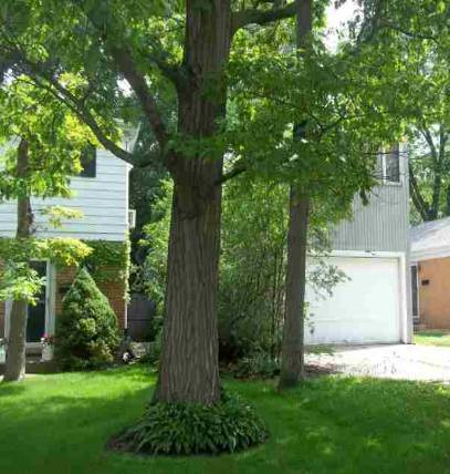 279 Linden Ave, one of homes for sale in Glencoe