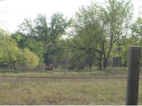 50 acres by Maysville, Oklahoma for sale
