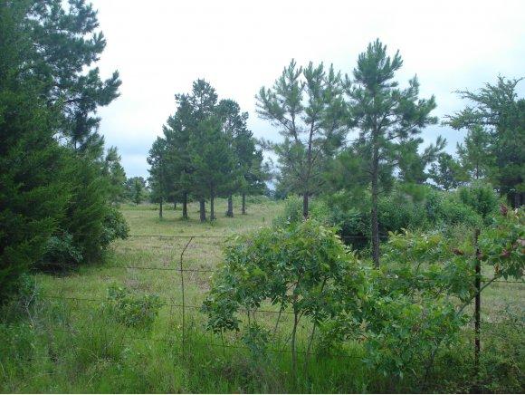 7.47 acres Stigler, OK