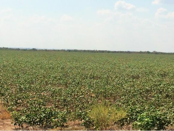 275 acres by Mangum, Oklahoma for sale