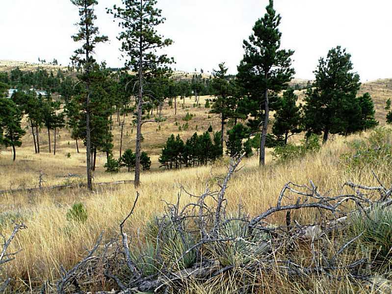 23.66 acres Roundup, MT