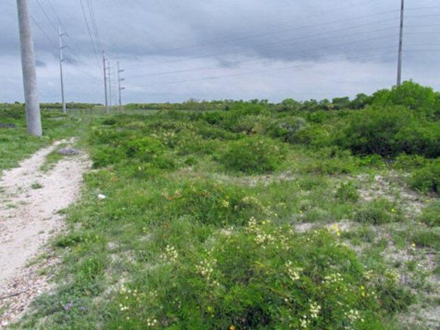 000 Deer Run Trace Three Rivers, TX 78071