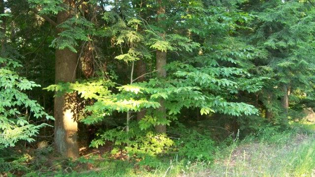 19 Wooded Lane Laporte, PA 18626