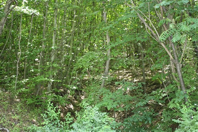 0 Stony Fork Creek Rd Wellsboro, PA 16901