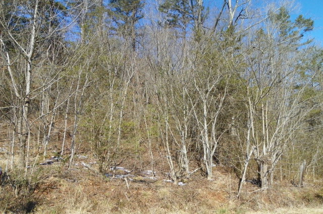 5527 Rhoney Rd, Connelly Spg, NC 28612