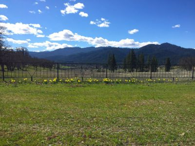 40 acres by Hayfork, California for sale