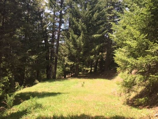 1591 South Fork Mnt Rd E Mad River, CA 95552