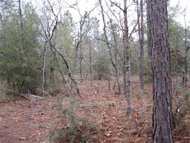 5 acres Chipley, FL
