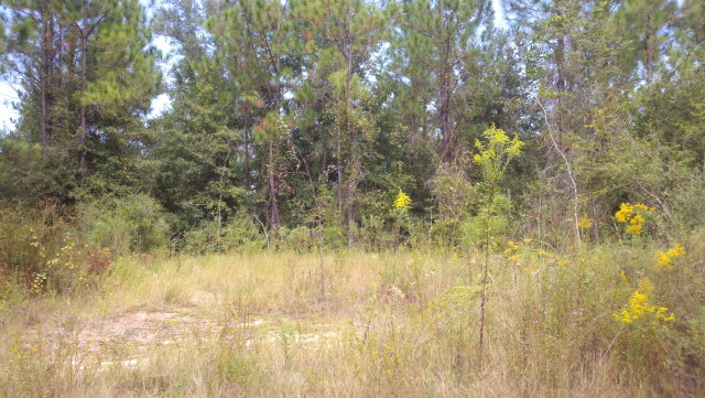 Image of Acreage w/House for Sale near Caryville, Florida, in Washington county: 5.00 acres
