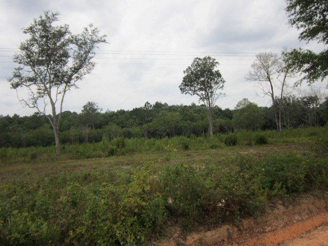 Image of Acreage for Sale near Caryville, Florida, in Washington county: 19.50 acres