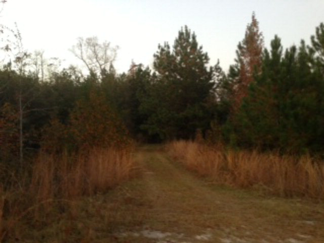 69.51 acres by Bonifay, Florida for sale