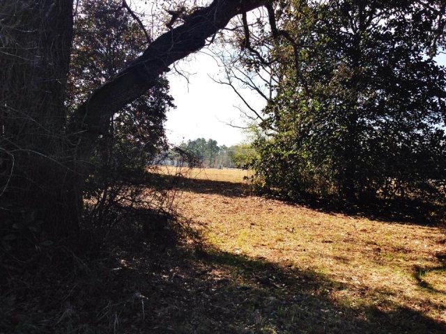 4.63 acres Bristol, FL