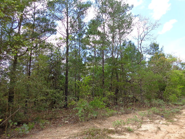10.77 acres Chipley, FL