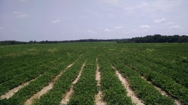 Image of Acreage for Sale near Bonifay, Florida, in Holmes county: 165.00 acres