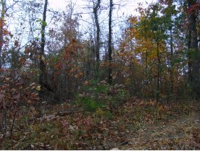 5.2 acres Addison, AL