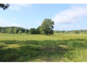 1062 County Road 1251, Vinemont, AL 35179