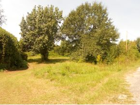 261 County Road 668, Hanceville, AL 35077