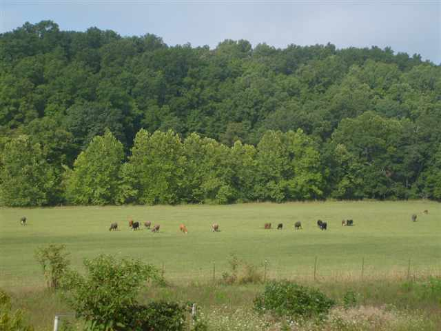 235 acres in Marble Hill, Missouri