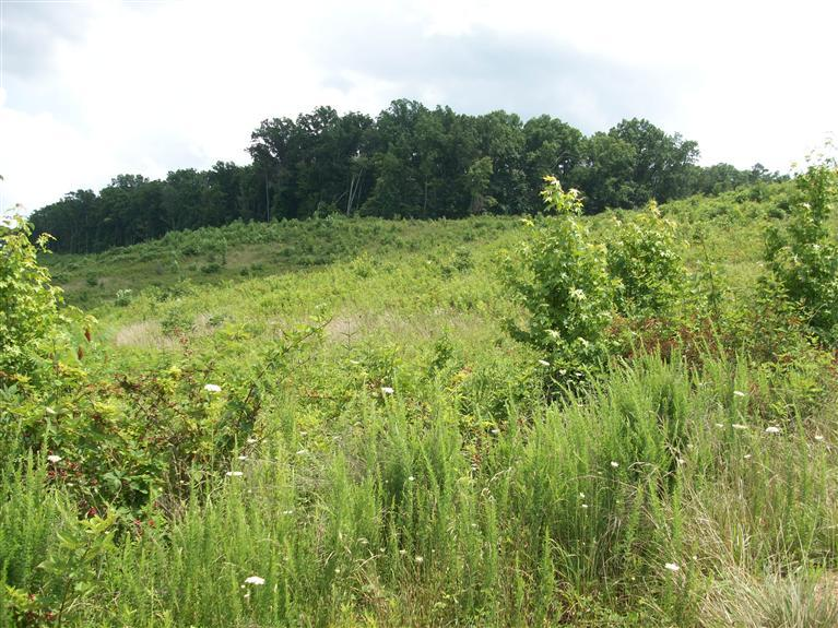 30 acres in Corbin, Kentucky