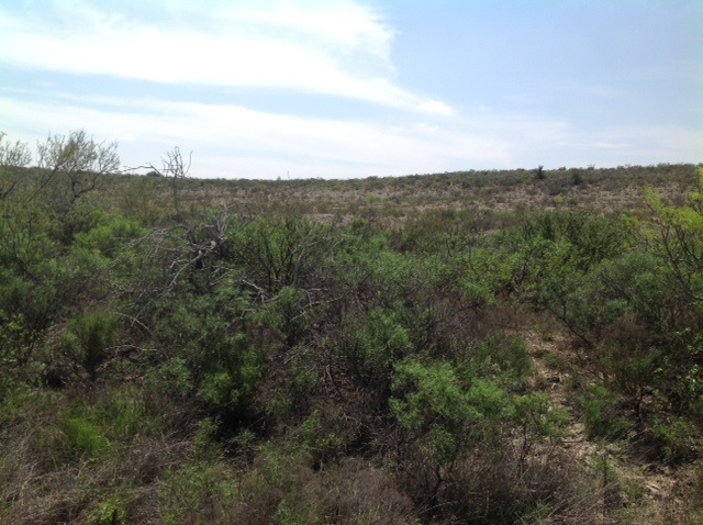 Tract 7 Phase I Heritage Canyon, 205.70 Langtry, TX 79848