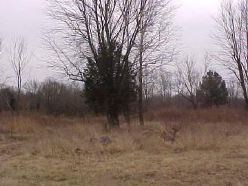Real Estate for Sale, ListingId: 17803856, Benton,IL62812