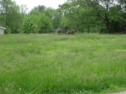 Real Estate for Sale, ListingId: 19737938, Murphysboro,IL62966