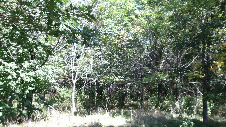 0000 Cherrybark Flora, IL 62839