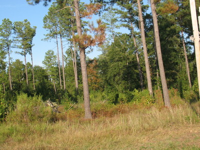 +/-19.18 acres Ouachita County Camden, AR 71701