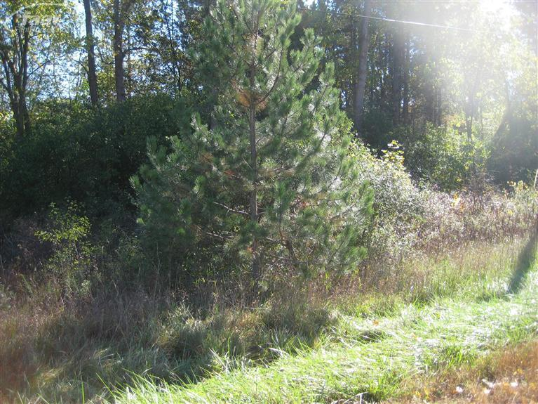 6.39 acres by Mount Morris, Michigan for sale