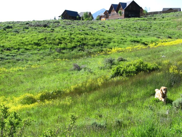 341 Blackstock Dr, Crested Butte, CO 81224