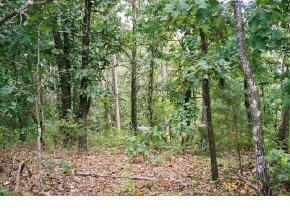 Image of Acreage w/House for Sale near Blue Eye, Missouri, in Stone county: 4.48 acres