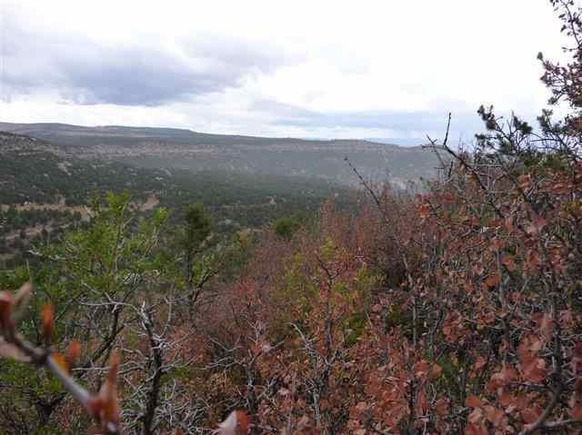 2.59 acres La Sal, UT