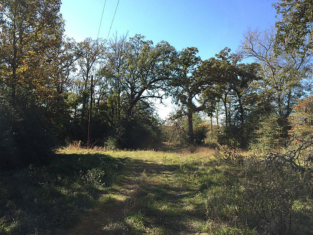 Photo of 22 Ac CR 165  Centerville  TX