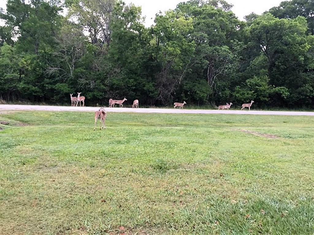 Photo of 0 Deer Trail Drive  Wharton  TX