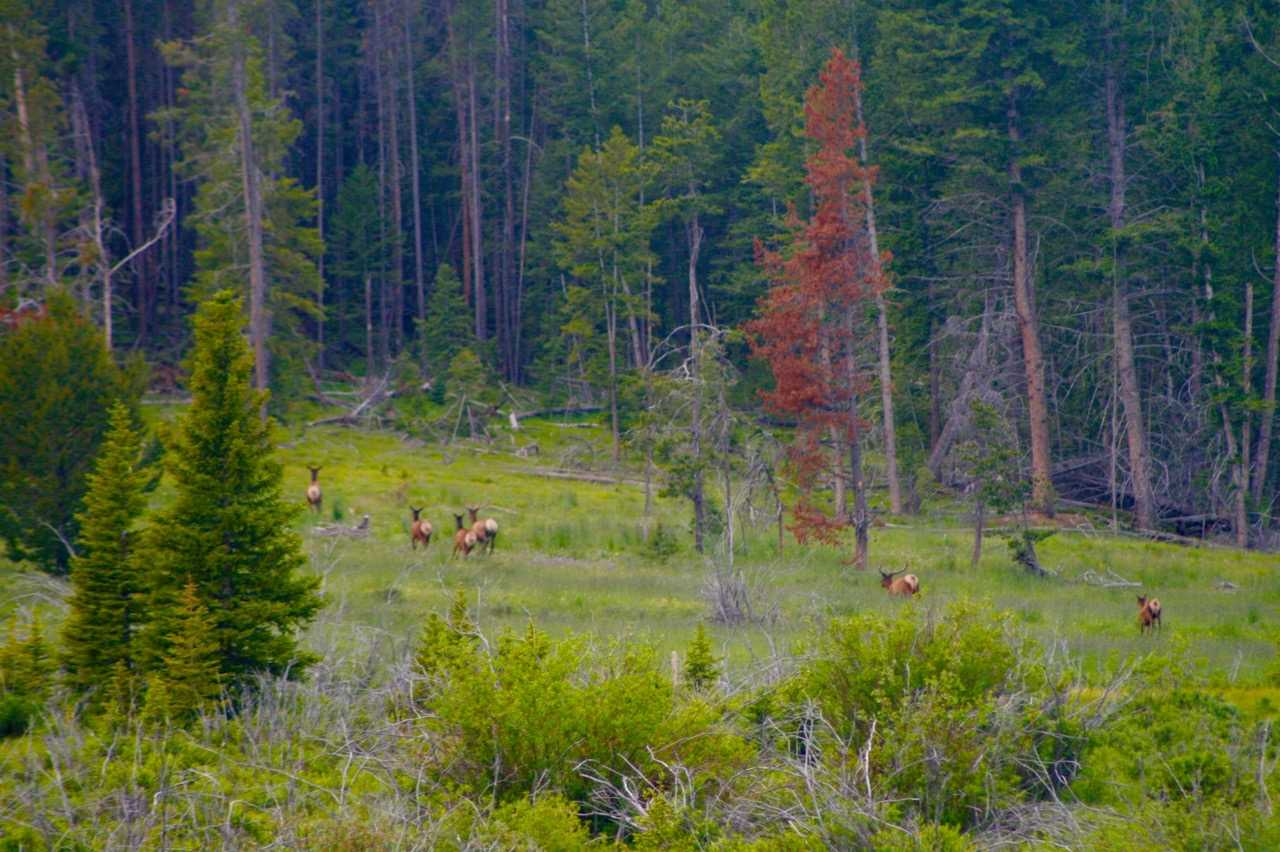 Image of Residential for Sale near Butte, Montana, in Silver Bow County: 300 acres