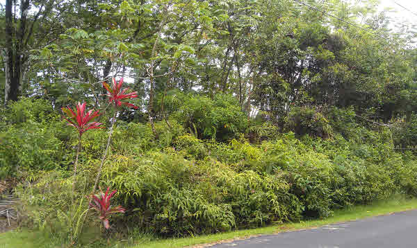 Real Estate for Sale, ListingId: 19905848, Pahoa, HI  96778