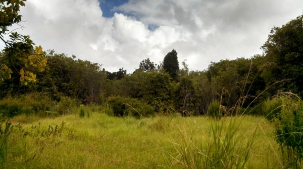 Real Estate for Sale, ListingId: 25303633, Volcano, HI  96785