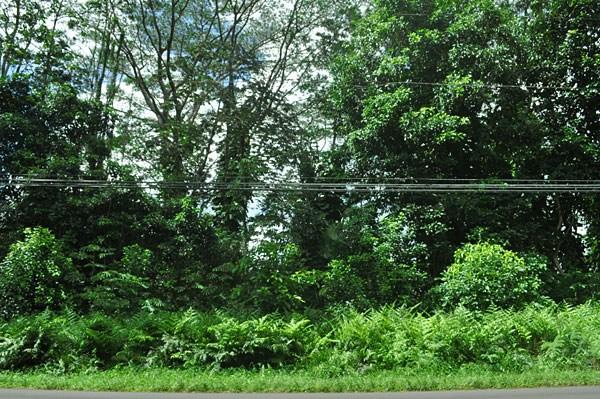 Real Estate for Sale, ListingId: 24973531, Pahoa,HI96778