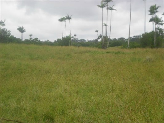 Land for Sale, ListingId:24973527, location: N PECK RD Volcano 96785
