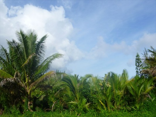 Real Estate for Sale, ListingId: 26079372, Pahoa,HI96778
