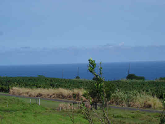 Real Estate for Sale, ListingId: 26786302, Pepeekeo, HI  96783