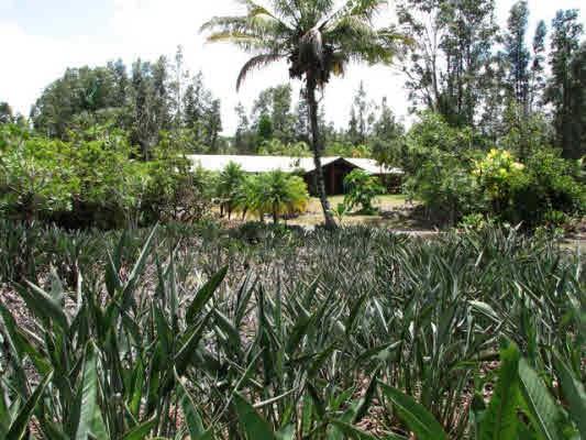 Real Estate for Sale, ListingId: 28948696, Pahoa,HI96778